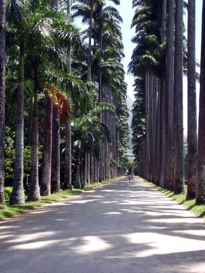 10 Tage Südosten, Brasilien, Im Stadtviertel Jardim Botanico liegt der 140 Hektar große botanische