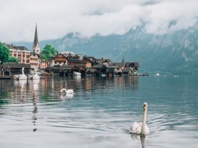 Kurzurlaub Hallstatt (Stadt), Oberösterreich, Österreich, Auch die Schwäne besuchen Hallstatt