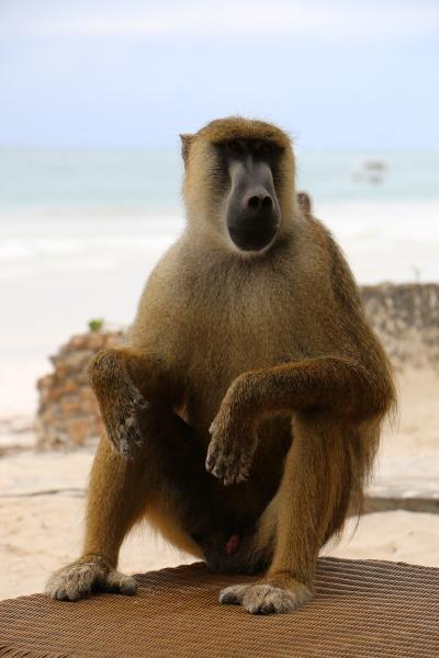 Kurzurlaub Kenia » Landesinnere
