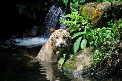Kurzurlaub Singapur, Singapur, Dieser Zoo ist kein normaler Zoo, sondern ein Nachtzoo. Du kannst also