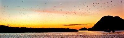 Kurzurlaub Flores, Indonesien, Unfassbares Naturspektakel - Tausende Flughunde steigen auf, um sich a