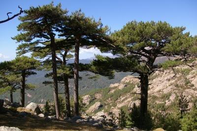 10 Tage Korsika, Frankreich, Corse