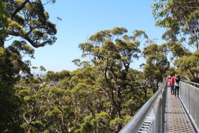 Langzeiturlaub Australien, Australien, Valley of the Giants Tree Top Walk