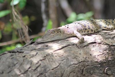 Langzeiturlaub Australien, Australien, Krokodil Safari
