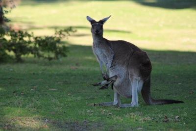 Langzeiturlaub Australien, Australien, Yanchep National Park
