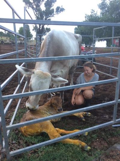 Langzeiturlaub Australien, Australien, Arbeit auf der Farm