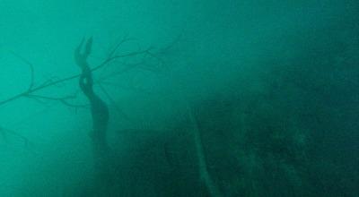 Zwei Wochen Riviera Maya & Insel Cozumel, Mexiko, In dieser Schwefelschicht sind abgestorbene Bäume zu sehen. Wir tauch