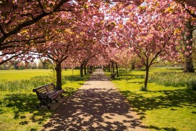 Kurzurlaub London & Umgebung, Großbritannien, Der Hydepark liegt im Zentrum Londons und ist perfekt für die verschi