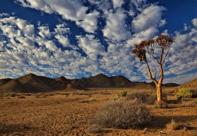 Zwei Wochen Südküste, Südafrika, Richtersveld  liegt im Nordwesten. Hier findest du eine gebirgige und