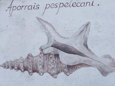 2 Wochen Costa de la Luz, Spanien, Wandmalerei in Sancti Petri
