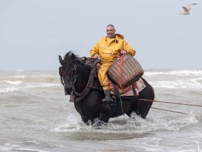 Eine Woche Belgien, Belgien, Strange: In Belgien werden auch mit Pferden Shrimps gefischt. Sie werd