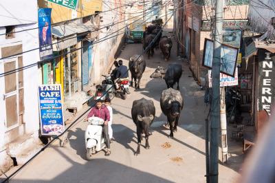 Kurztrip Agra (Stadt), Uttar Pradesh, Indien, Ich finde auch die verwinkelten Gassen im Tajganj spannend.