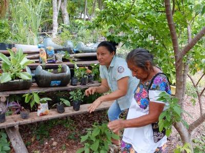 2 Wochen Halbinsel Yucatán, Mexiko, Bei den Einheimischen der Eco Lodge Kiicham Pax bekommt man gezeigt, w