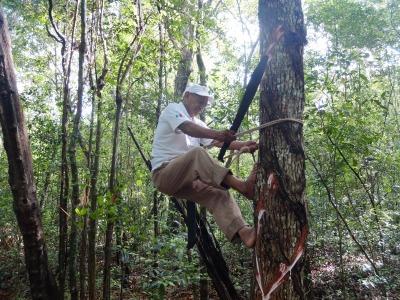 Zwei Wochen Halbinsel Yucatán, Mexiko, Rodrigo ist 72 & Chiclero. Er sammelt Kautschuk auf traditionelle Art