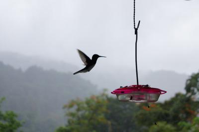 3 Wochen Tobago, Trinidad und Tobago, Die Natur inmitten im Dschungel genießen