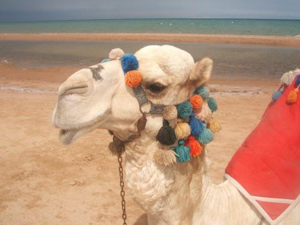 Kurztrip Rotes Meer, Ägypten, Von Hurghada aus werden immer wieder Tagesausflüge in die Wüste ange