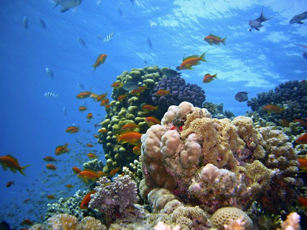 Kurztrip Ägypten » Rotes Meer