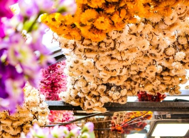 Kurztrip Amsterdam (Stadt), Amsterdam & Umgebung, Niederlande, Jedes Mal aufs Neue verliebe ich mich in die unzähligen Blumen - und