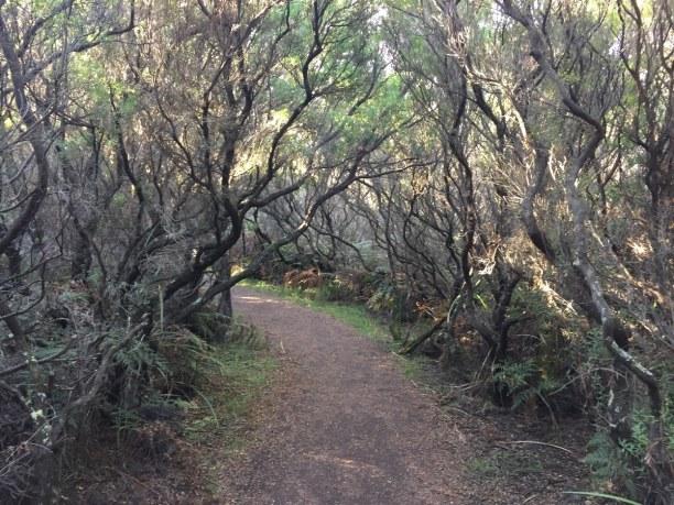Kurztrip Victoria, Australien, Immer wieder gibt es spannende Wanderwege entlang der Great Ocean Road