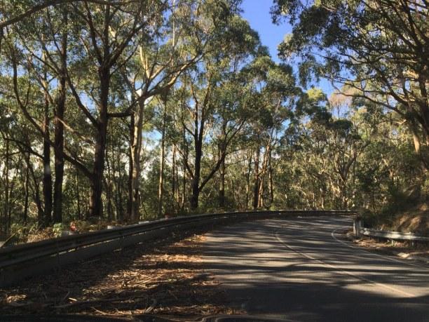 Kurzurlaub Victoria, Australien, Bei geöffnetem Fenster riecht es hier besonders gut. Die Straße nach