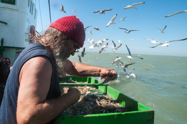 1 Woche Belgien, Belgien, Shrimps und Garnelen werden im seichten Wasser vor der Küste gefischt