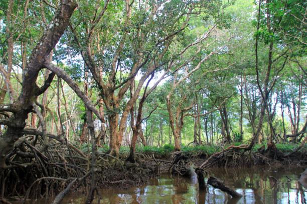 Kurzurlaub Bandar Seri Begawan (Stadt), Brunei, Brunei, Mangroven-Wald