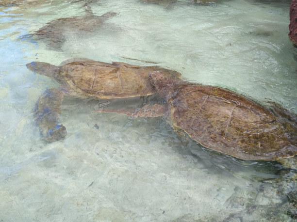 Kurztrip Cayman Inseln » Grand Cayman