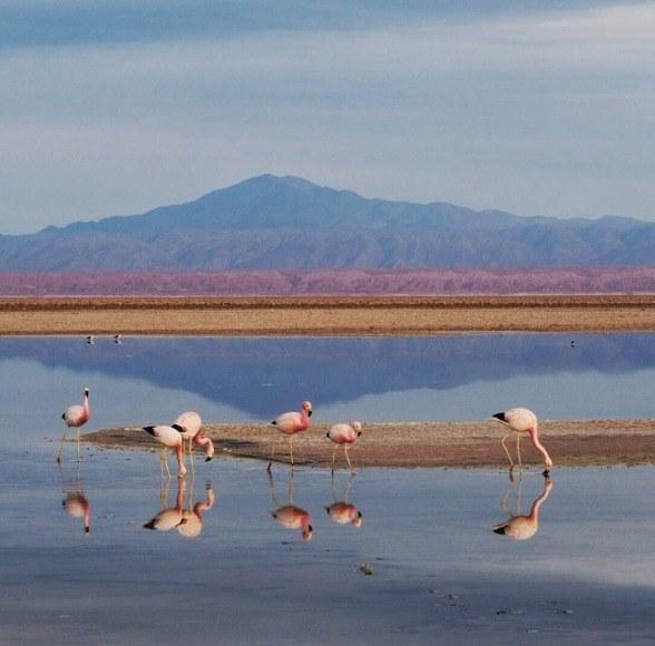 Langzeiturlaub Santiago de Chile & Umgebung, Chile, Mitten in der Atacama Wüste finden sich immer wieder Salzlagunen wo d