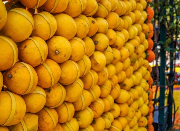 Eine Woche Nizza (Stadt), Côte d'Azur, Frankreich, Mit farblich passenden Gummis werden die Zitronen und Orangen befestig