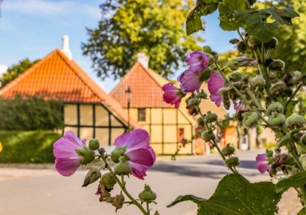 Kurzurlaub Kopenhagen, Dänemark, Ende August blüht und grünt es an jeder Ecke