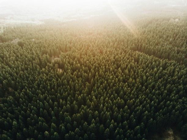 2 Wochen Allgäu, Deutschland, Endlose Wälder