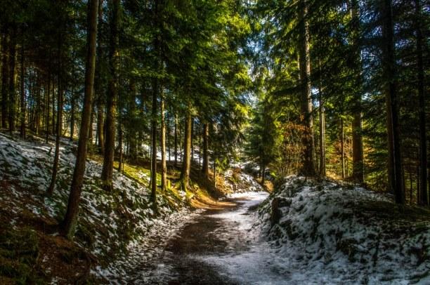 Kurzurlaub Deutschland » Schwarzwald
