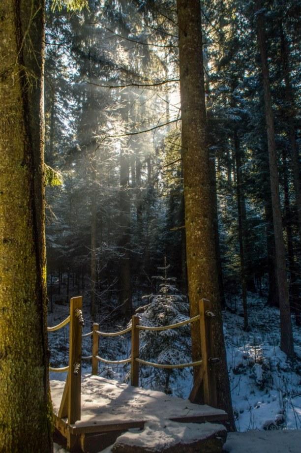 Kurzurlaub Schwarzwald, Deutschland, Meditationspfad auf dem Weg.