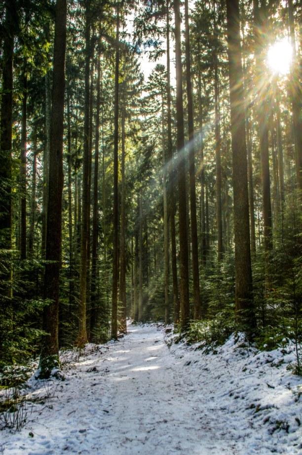 """Kurztrip Schwarzwald, Deutschland, Krabbenweg. Der Krabbenweg führt durch den """"Krabbenwald"""""""