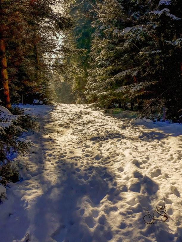 Kurztrip Schwarzwald, Deutschland, Traumhaft schöne Wege!