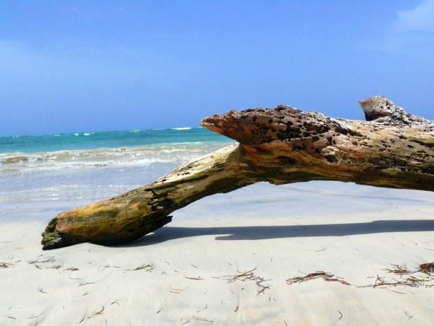 10 Tage Dominikanische Republik, Dominikanische Republik, Strände findest du auf jeder Seite der Insel. Im Norden sind die typi