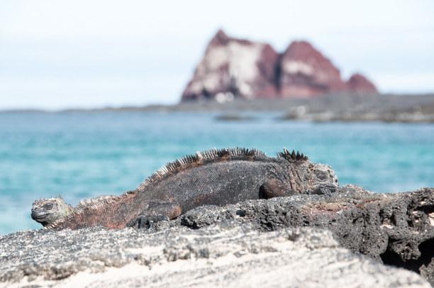Kurztrip Galapagos (Stadt), Ecuador, Ecuador, Die Tiere haben sich an die Lebensbedingungen auf den Inseln angepasst