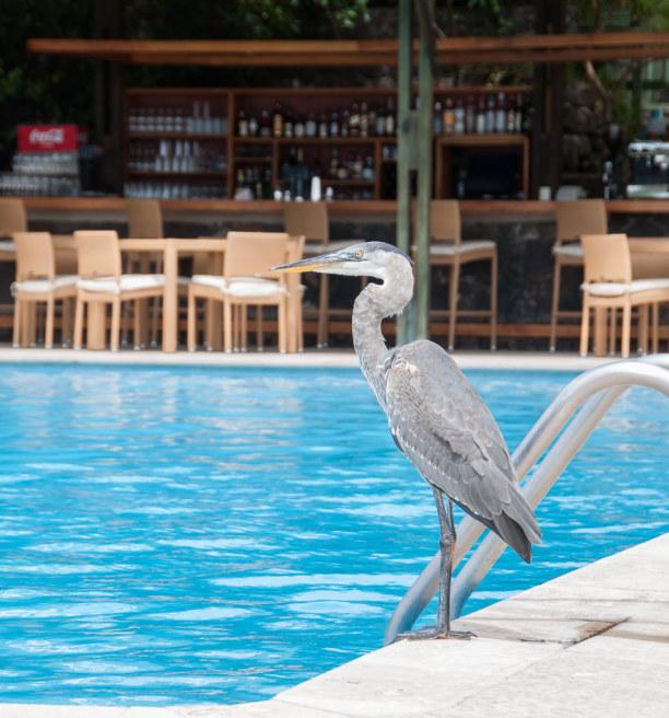 Kurzurlaub Galapagos (Stadt), Ecuador, Ecuador, Schon im Hotel merke ich, dass auf den Galapagosinseln Menschen und Ti
