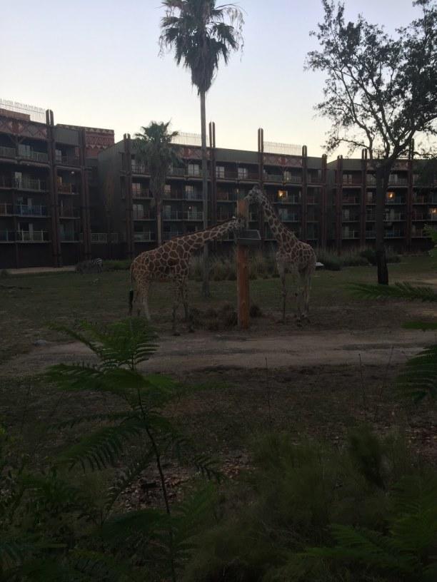 Langzeiturlaub Orlando (Stadt), Florida, USA, Zoo