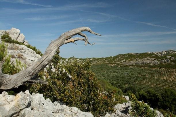 Eine Woche Provence, Frankreich, Wanderungen im Naturpark der Alpillen sind ein echtes Erlebnis. Der we