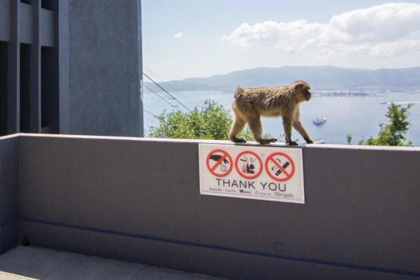 Kurzurlaub Gibraltar, Gibraltar, Die beliebteste Sehenswürdigkeit von Gibraltar ist wohl der Felsen. K