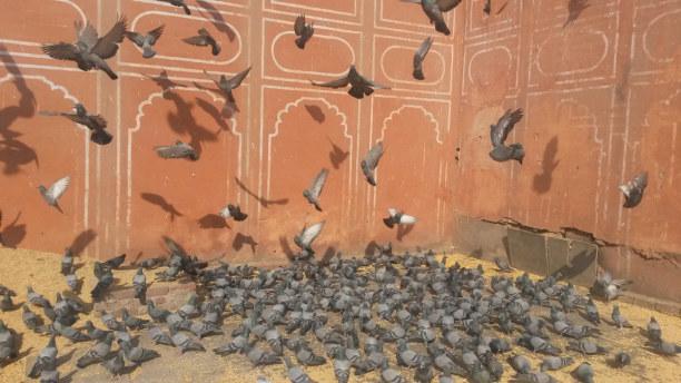 Kurzurlaub Indien » Delhi und Umgebung