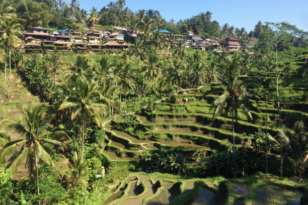 10 Tage Bali, Indonesien, Tegalalang Reisterrassen