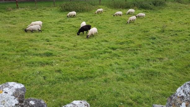 Kurzurlaub Irland » Irland