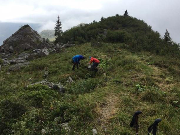 Kurzurlaub Italienische Alpen, Italien, Heidelbeeren sammeln für das Frühstück.