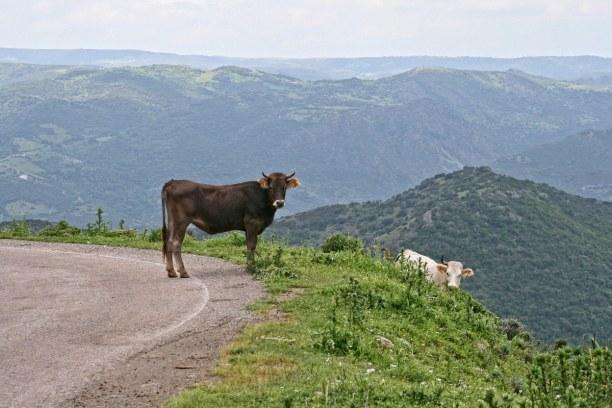 2 Wochen Italien » Sardinien