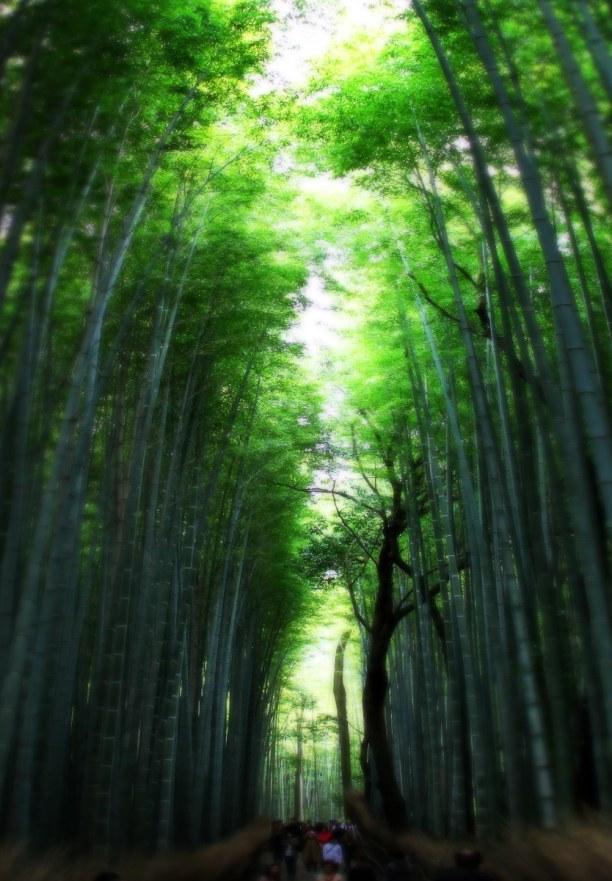 Zwei Wochen Honshu, Japan, Der Bambuswald in der Nähe unseres Ryokans