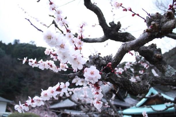 2 Wochen Honshu, Japan, Arashiyama