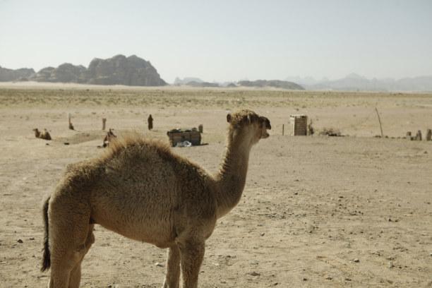 Kurzurlaub Petra & Umgebung, Jordanien, Visit Jordan