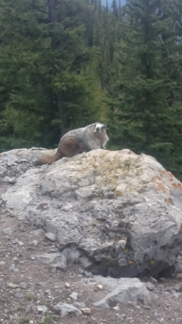 Langzeiturlaub Kanada » Alberta